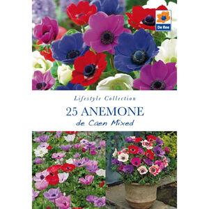 Anemone De Caen Mixed Flower Bulbs