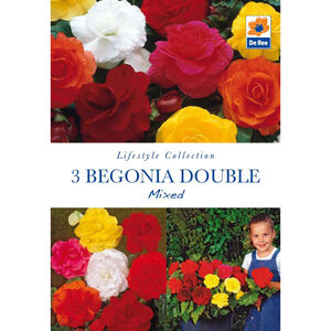 Begonia Double Mixed Flower Bulbs