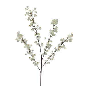 Prunus Branch with 156 Flowers
