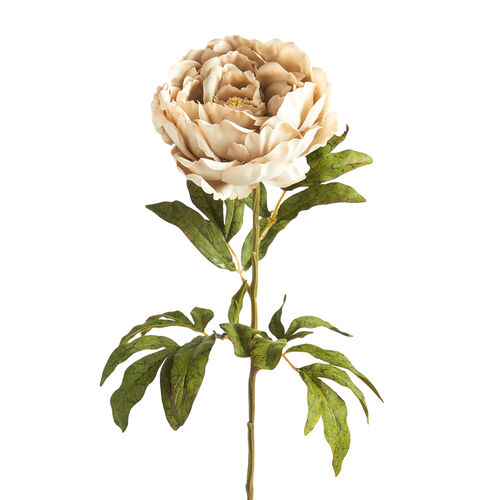 Peony Single Stem Champagne Flower 74cm