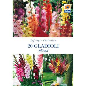 Gladioli Mixed Flower Bulbs