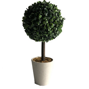 Topiary Ball Plant