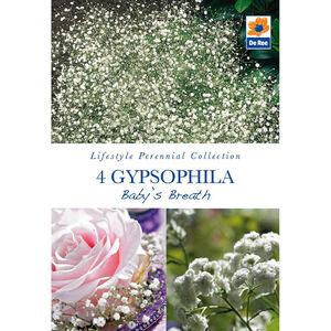 Gypsophila Baby's Breath