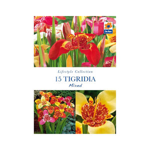 Tigridia Mixed