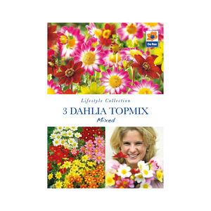 Dahlia Topmix Mixed