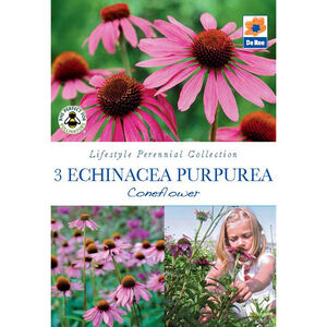 Echinacea Purperea Conflower