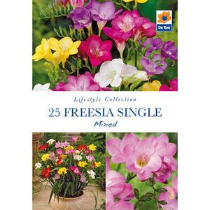 Freesia Single Mixed Flower Bulbs