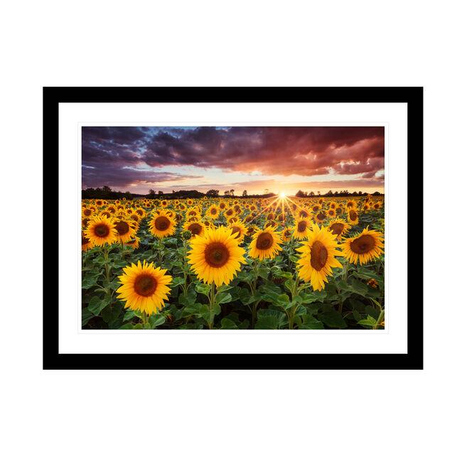 In the Sunshine 54cm x 74cm
