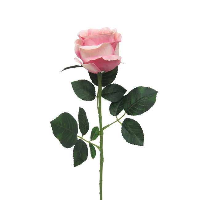 Mountain Rose Stem with Foliage Soft Pink 57cm