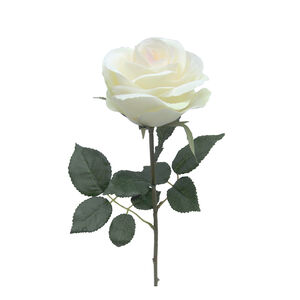 Rose Single Stem Cream 50cm
