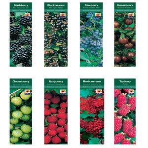 Fruit Plant Varieties