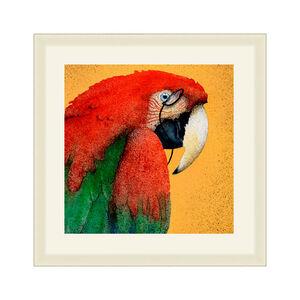 Red Parrot Framed 37x37cm