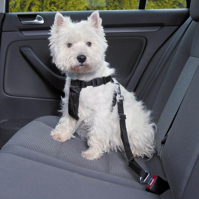 Car Pet Harness