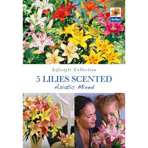 Lillies Scented Asiatic Mixed Flower Bulbs