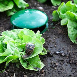Pack Of Two Slug Traps
