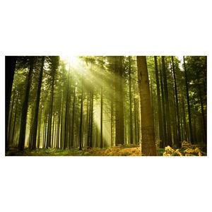 Autumn Sun Canvas 50cm x 100cm