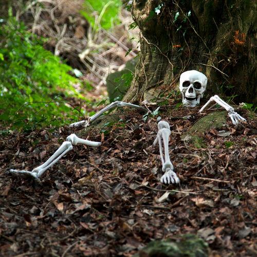 Lifesize Ground Breaking Skeleton