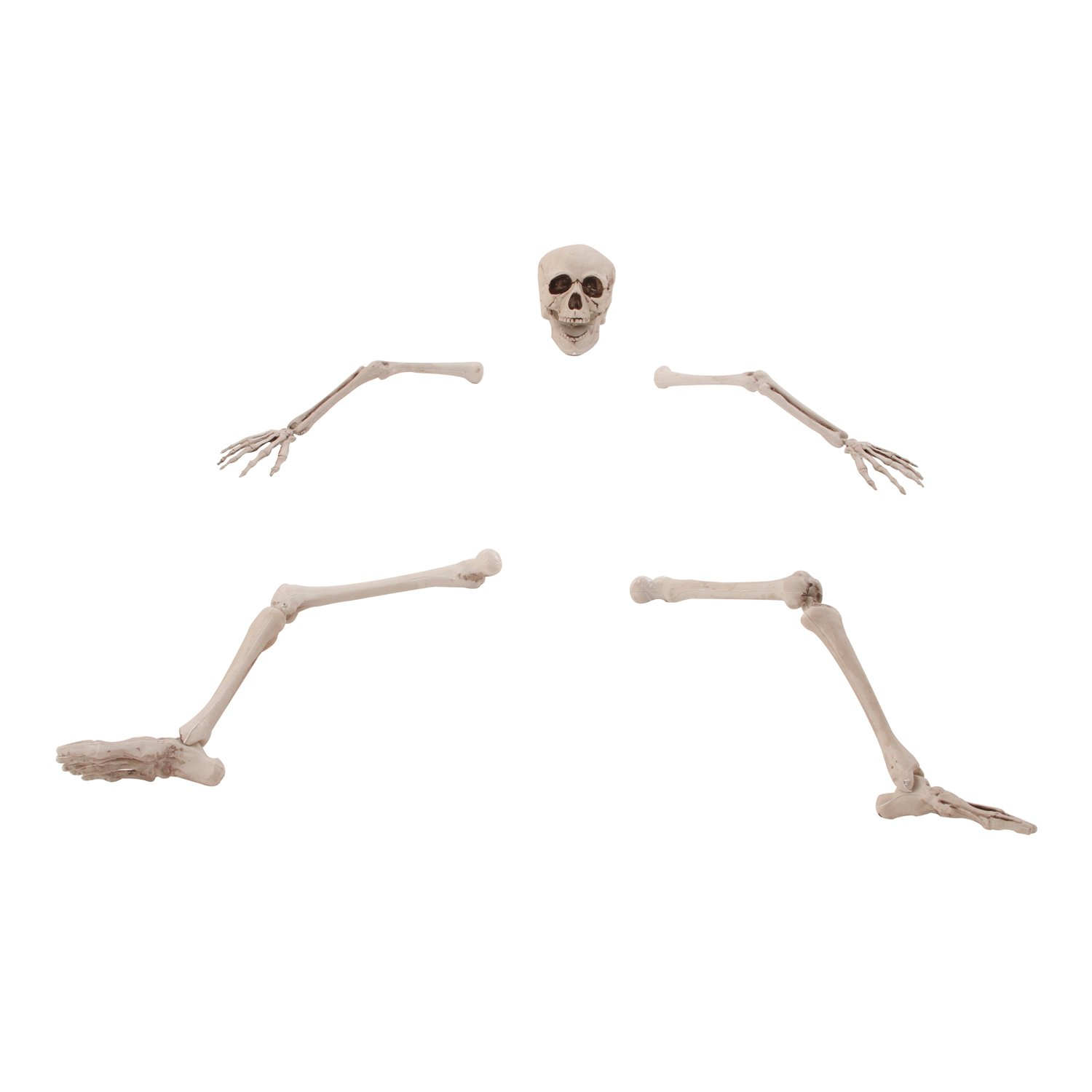 life size halloween skeleton print out | www.topsimages
